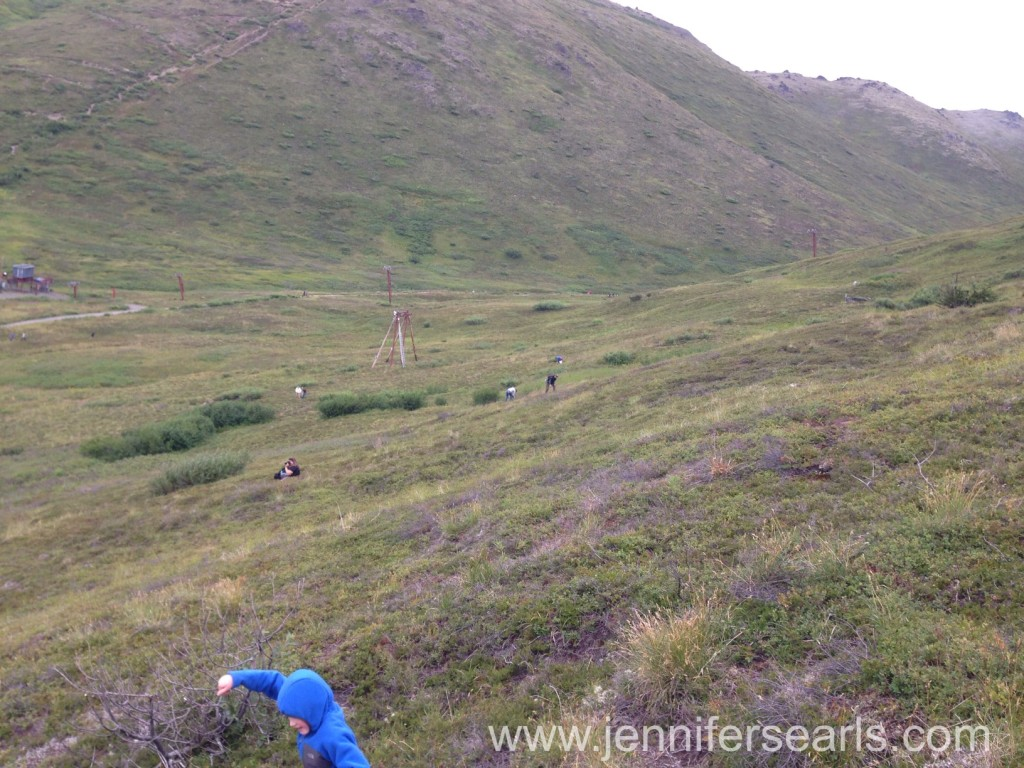 Arctic Valley Blueberry Picking